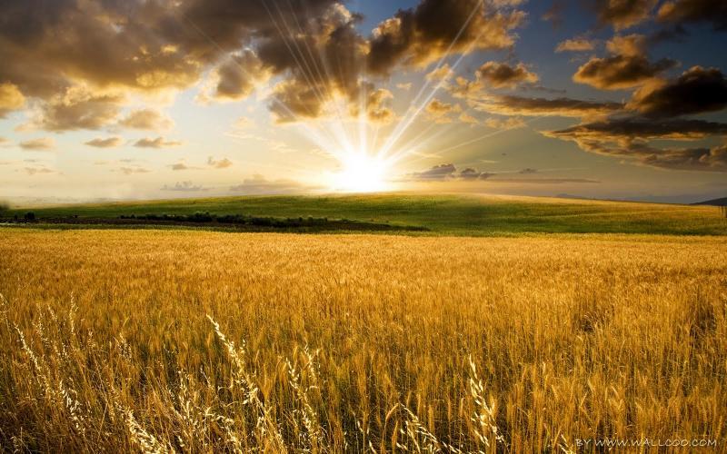 Devocional: Siembra y cosecha