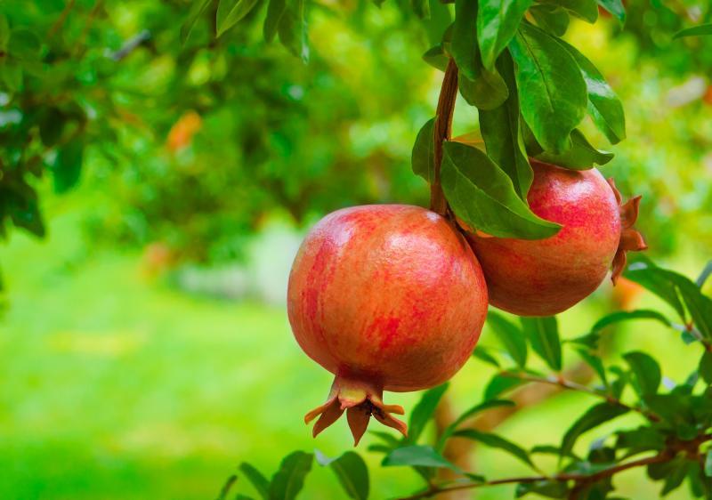 Devocional: Llevando fruto espiritual